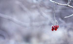 Gefrorene Beere im Winter